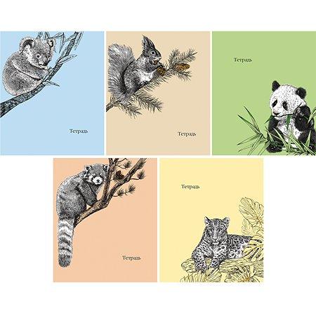 Тетрадь Феникс + Животные (графика) 48 л в ассортименте