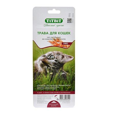 Лакомство для кошек TITBIT Трава овес 40 г