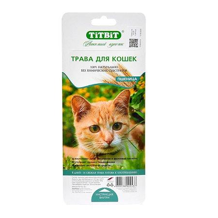 Лакомство для кошек TITBIT Трава пшеница 50 г