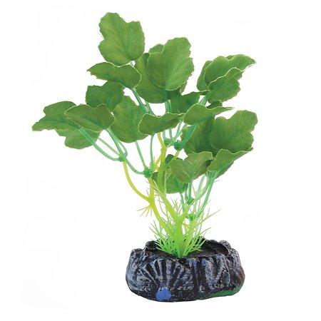 Растение для рыб Laguna Гидрокотила 74044174