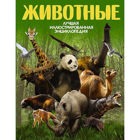 Книга АСТ Животные