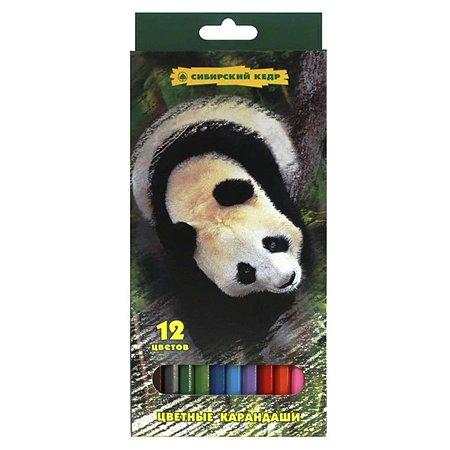 Карандаши цветные СКФ 12 цв. Панда