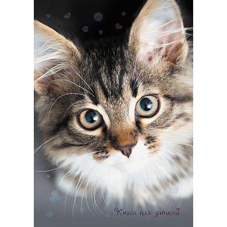 Книга записей Listoff Пушистый котик А6 48л