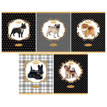 Тетрадь Феникс + Модные собаки 48 л в ассортименте