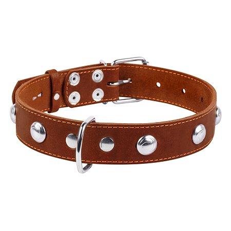 Ошейник для собак CoLLar крупных пород с украшением Коричневый 02716