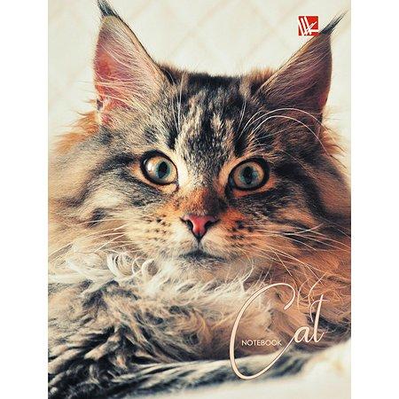 Книга для записей  А6 Listoff Шикарный кот  64 листа (клетка)
